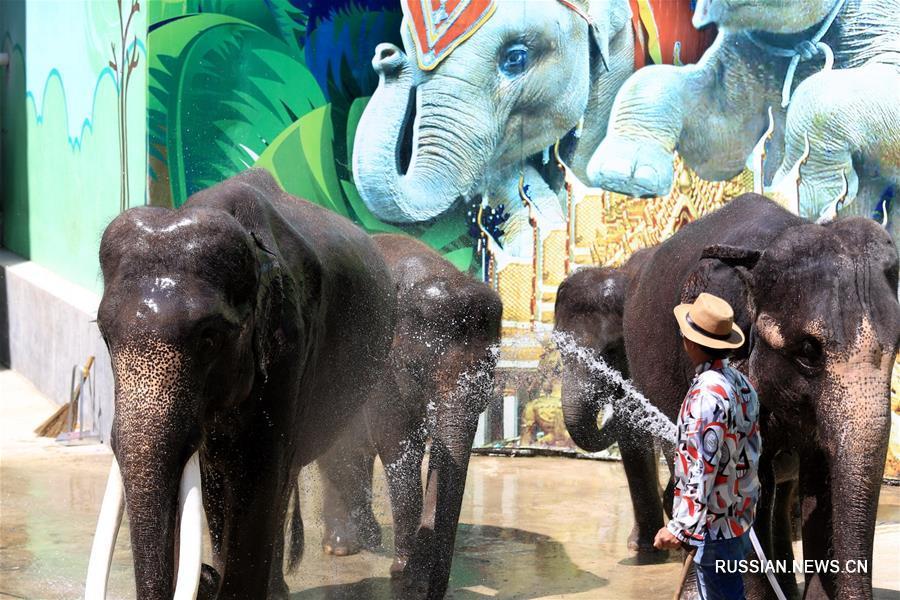 Животные в Даляньском зоопарке спасаются от жары