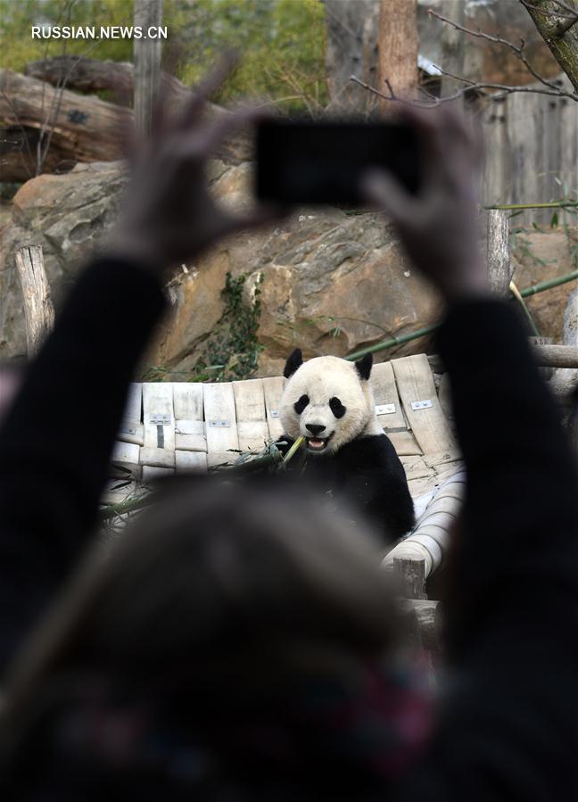 Родившаяся в США панда по кличке Бао Бао отправилась в Китай