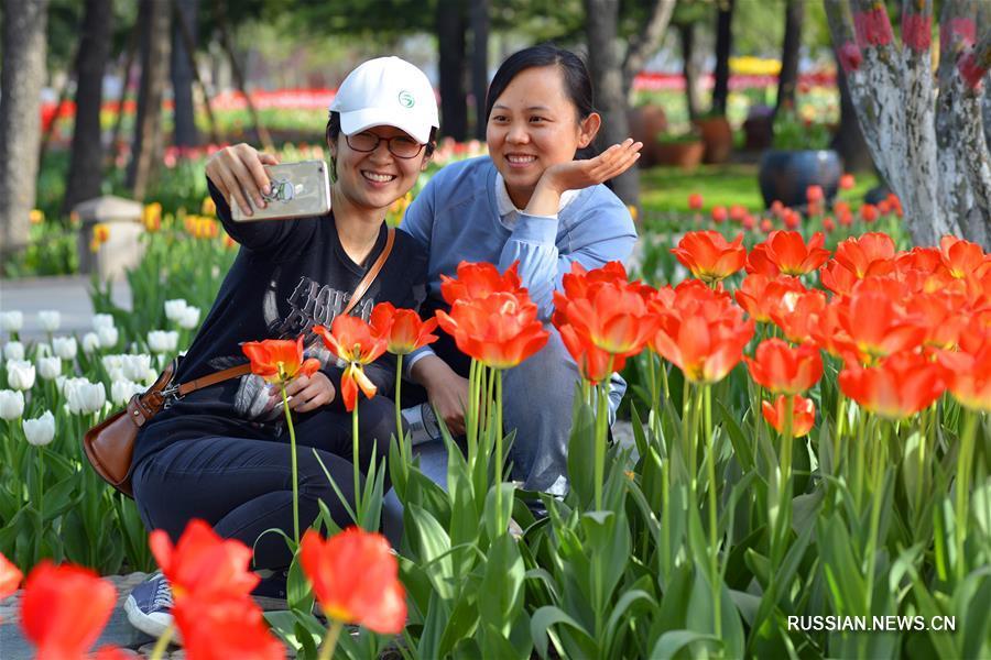 Фестиваль тюльпанов в г. Шицзячжуан на севере Китая
