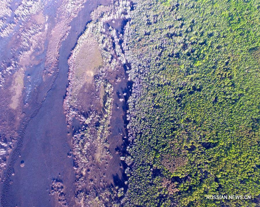 Лесной пожар во Внутренней Монголии полностью потушен
