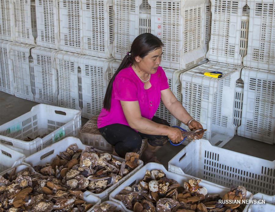 """""""Зеленые"""" технологии приносят доход фермерам на востоке Китая"""