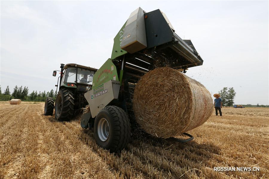 На полях Китая собирают пшеничную солому для дальнейшей утилизации