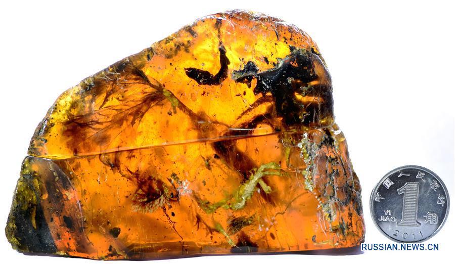 Ученые нашли в янтаре останки доисторического птенца