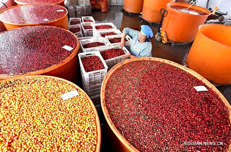 Внедрение новых моделей сельхозпроизводства в уезде Июань