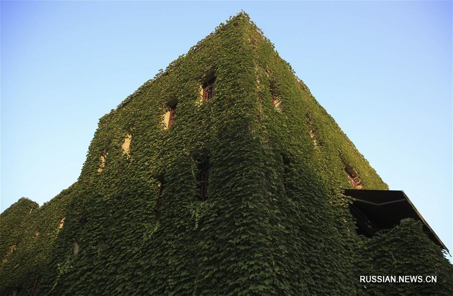 Дикий виноград на здании в Чунцине
