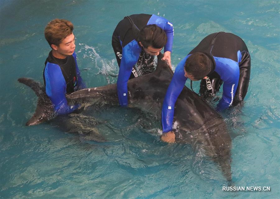 Застрявшего на мелководье дельфина после двухмесячного лечения выпустили в море
