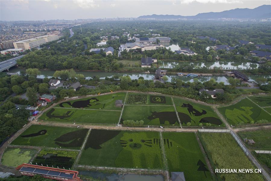 """""""Зоопарк"""" на рисовых полях в Ханчжоу"""