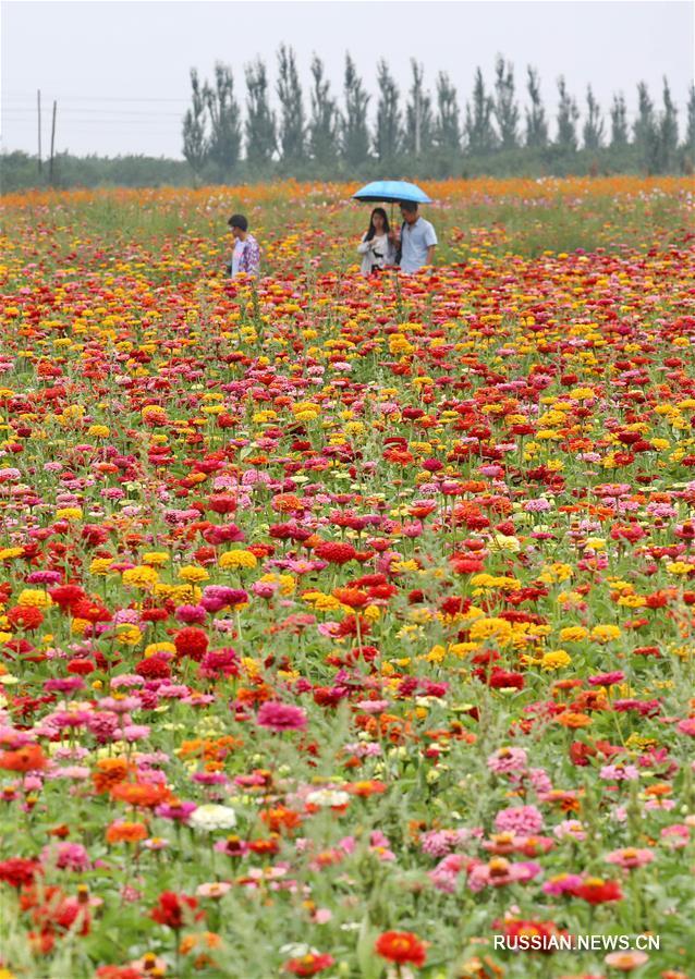 Море цветов в уезде Янъюань