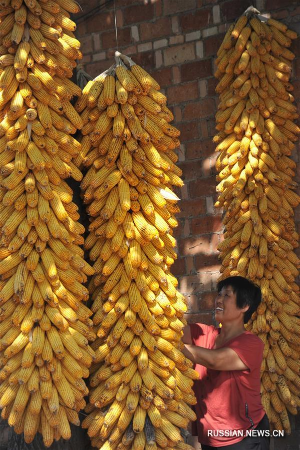 Конец лета -- пора забот у китайских фермеров