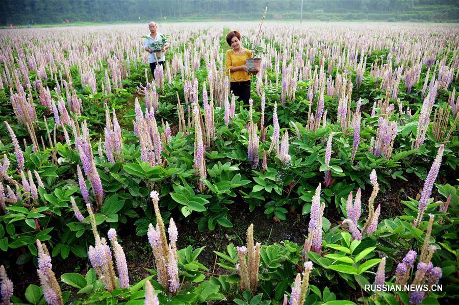 Сбор урожая в конце лета