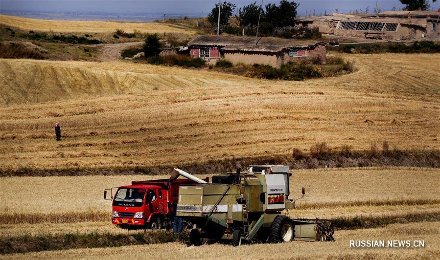 Золотые пшеничные поля в ландшафтном парке Джанбулак