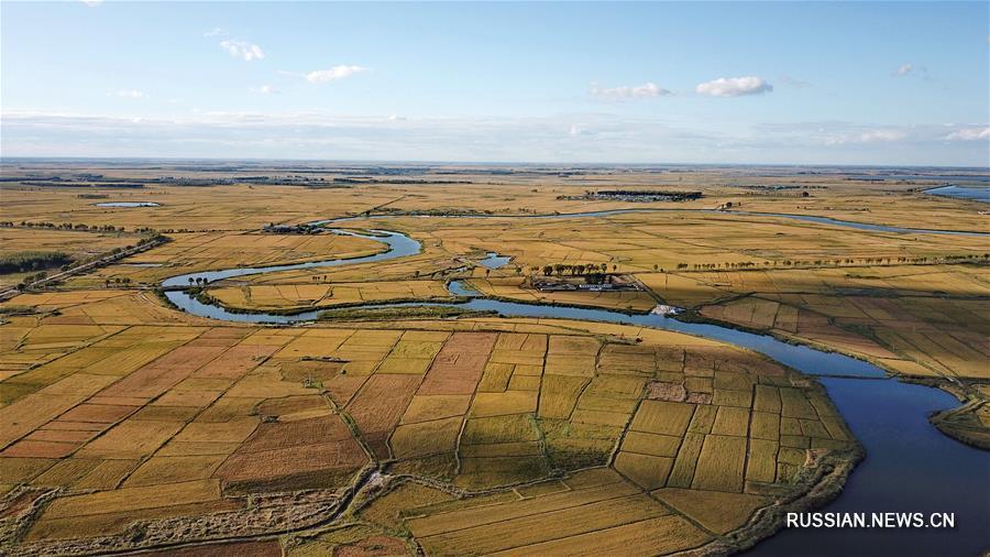 Золотые рисовые поля в Байчэне
