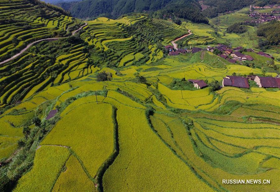 Террасные поля в Уишане