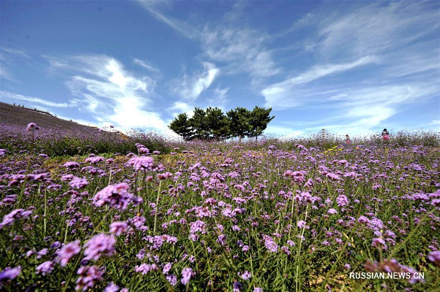 Осенние цветы на склонах гор Яньшань