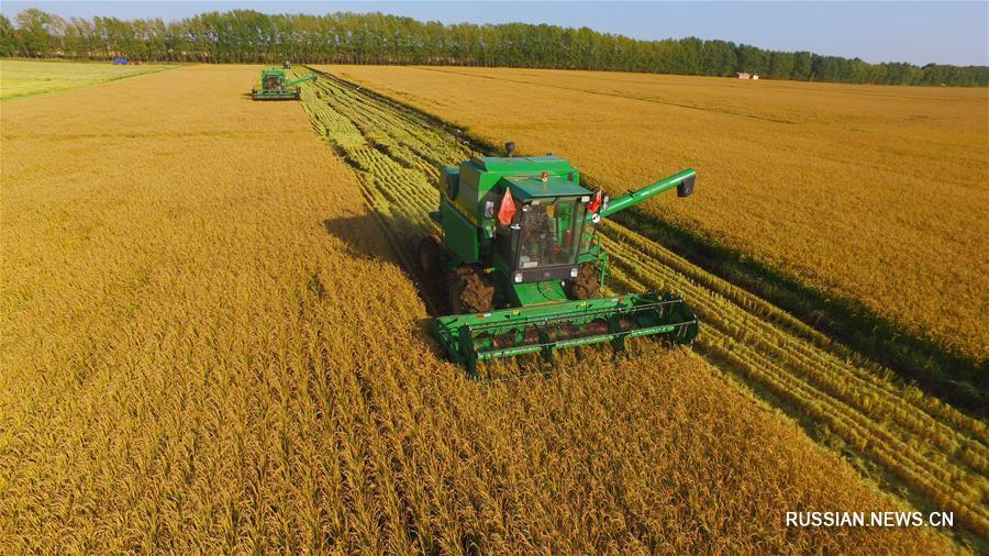 Уборка зерновых в провинции Хэйлунцзян