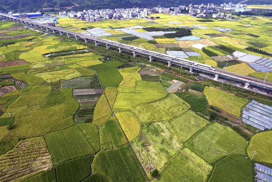 Поезд среди осенних полей провинции Гуйчжоу