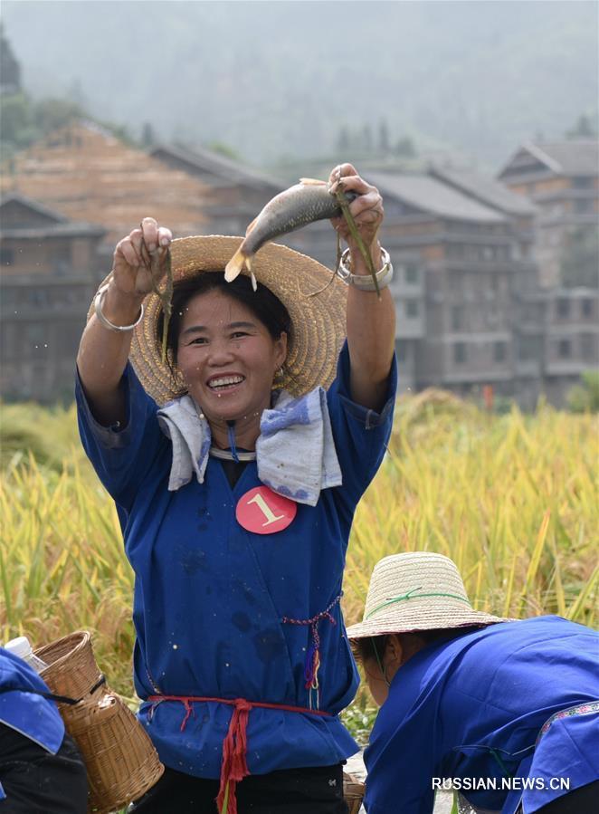 В уезде Саньцзян представительницы народности дун соревновались в ручной рыбной ловле и скоростной уборке риса