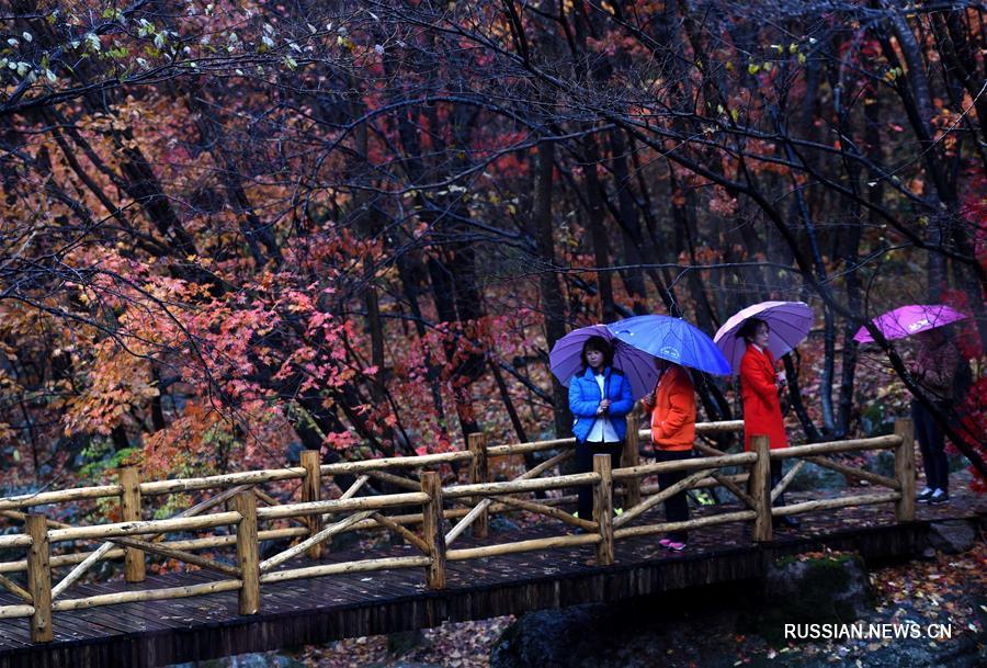 Золотая осень на северо-востоке Китая