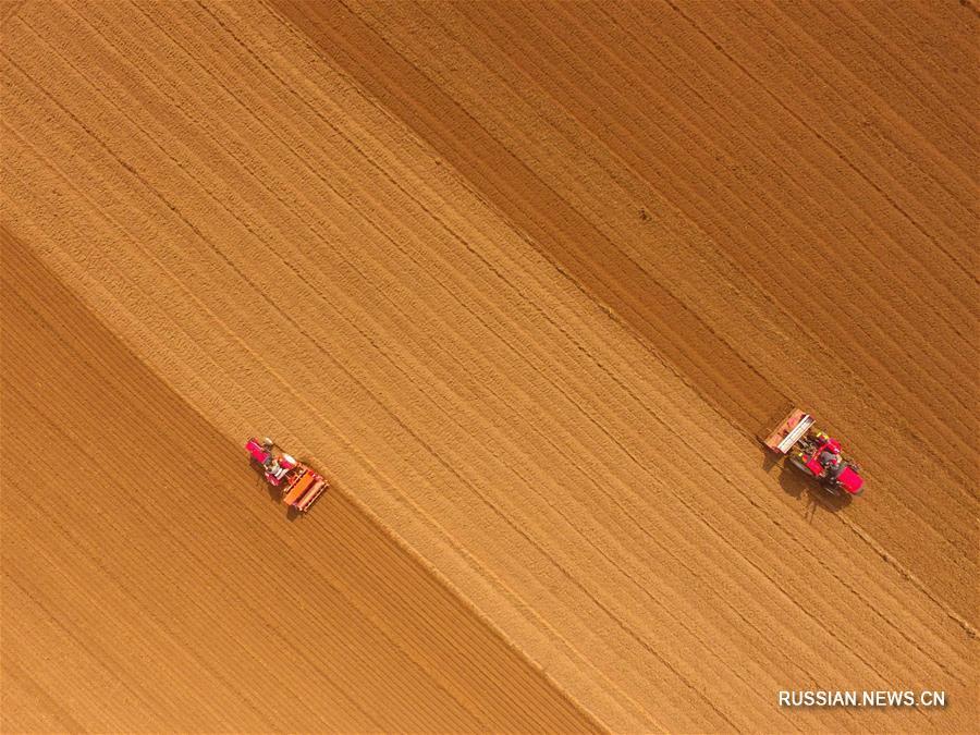 В провинции Шаньдун начали сеять озимую пшеницу