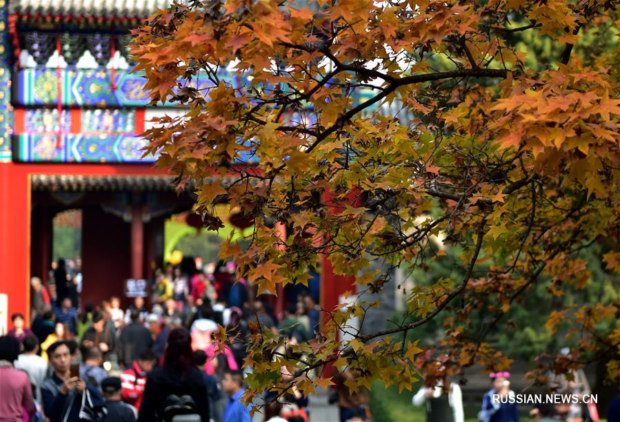 Пора любования красными листьями в пекинском парке Сяншань