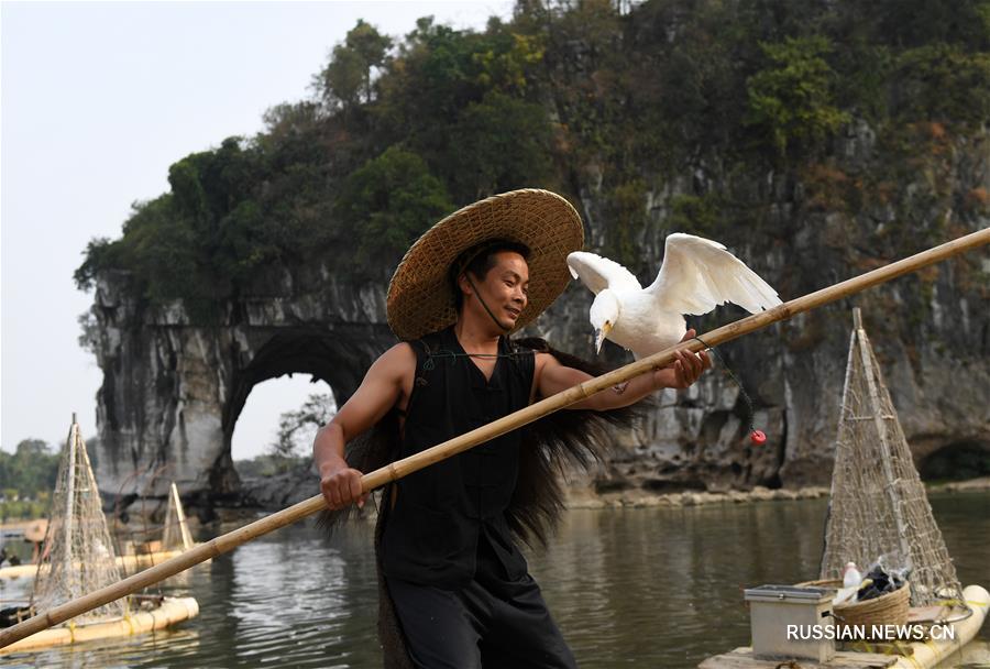 Рыболовное шоу с бакланами в ландшафтном парке Сяншань