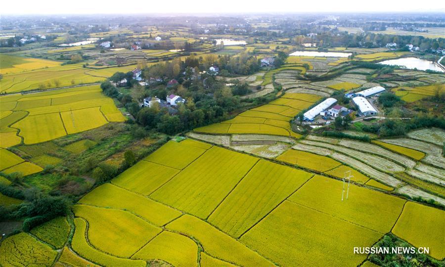 Урожайные поля уезда Шучэн