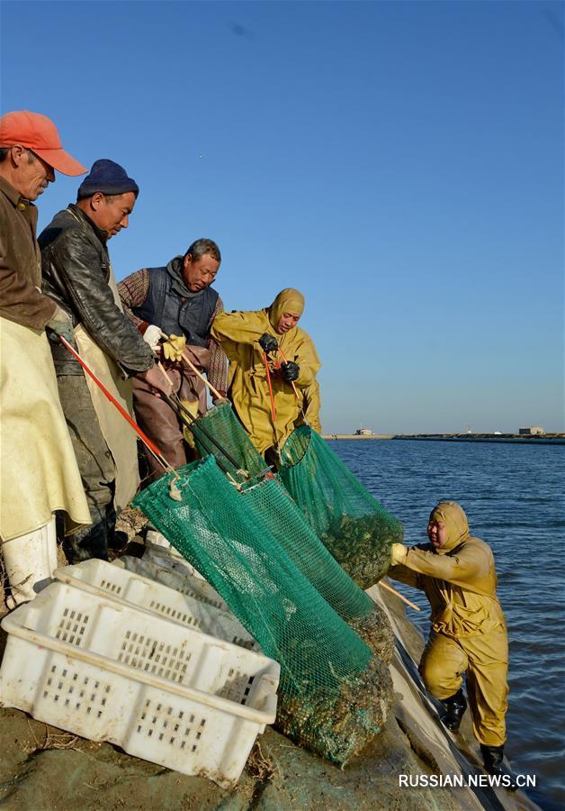 Уезд Лаотин на севере Китая -- там, где выращивают свежайший морской огурец