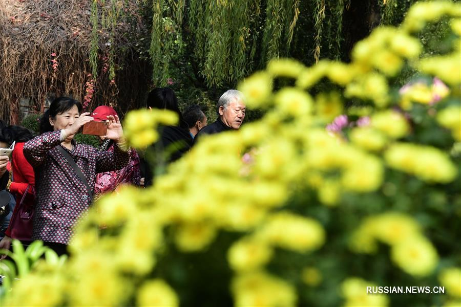 38-я Осенняя выставка хризантем у источника Баоту в Цзинане