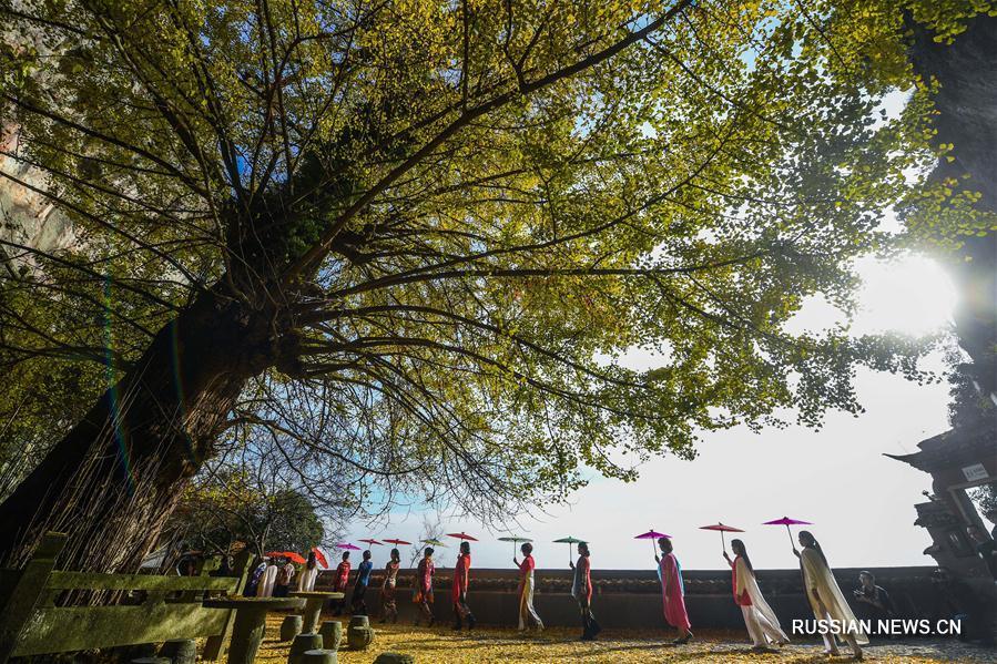 Семисотлетнее дерево гинкго в Цзяньдэ
