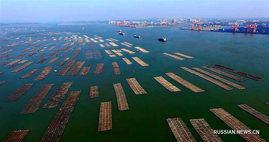 Устричные фермы в море Маовэй на юге Китая