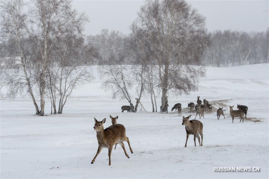 Олени в зимней степи