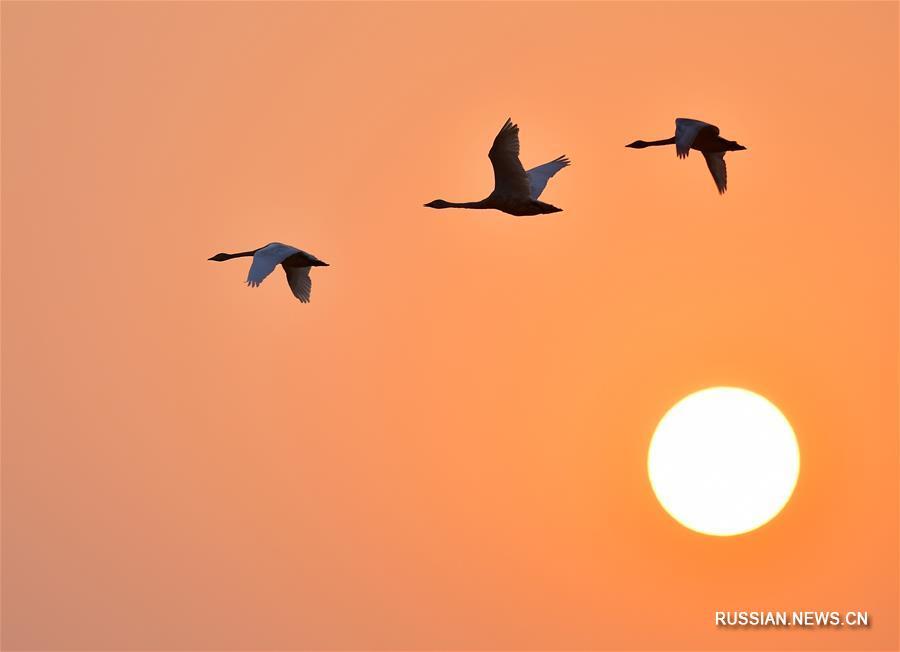 Перелетные птицы на закате в провинции Цзянси