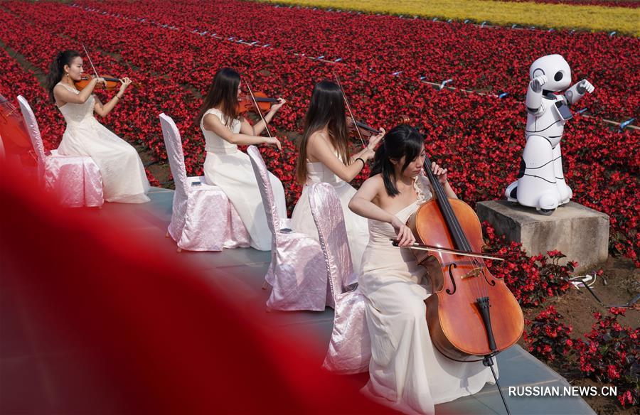 Предновогодний концерт среди цветущих бегоний
