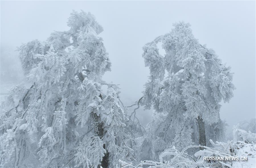 """Лес """"ледяных скульптур"""", созданных природой в уезде Сюаньэнь"""
