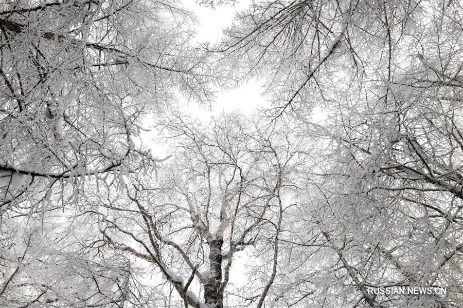 Иней посеребрил деревья в АР Внутренняя Монголия