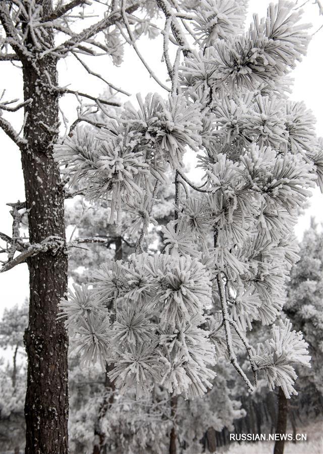 Иней украсил деревья в ландшафтном парке Цзыцзиньшань в провинции Шаньси