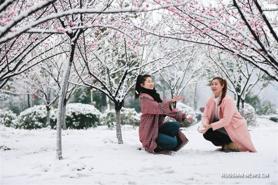Снег и цветущие сливы в уезде Сюйи