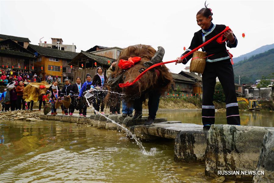 """Фестиваль """"весенних быков"""" в уезде Луншэн"""