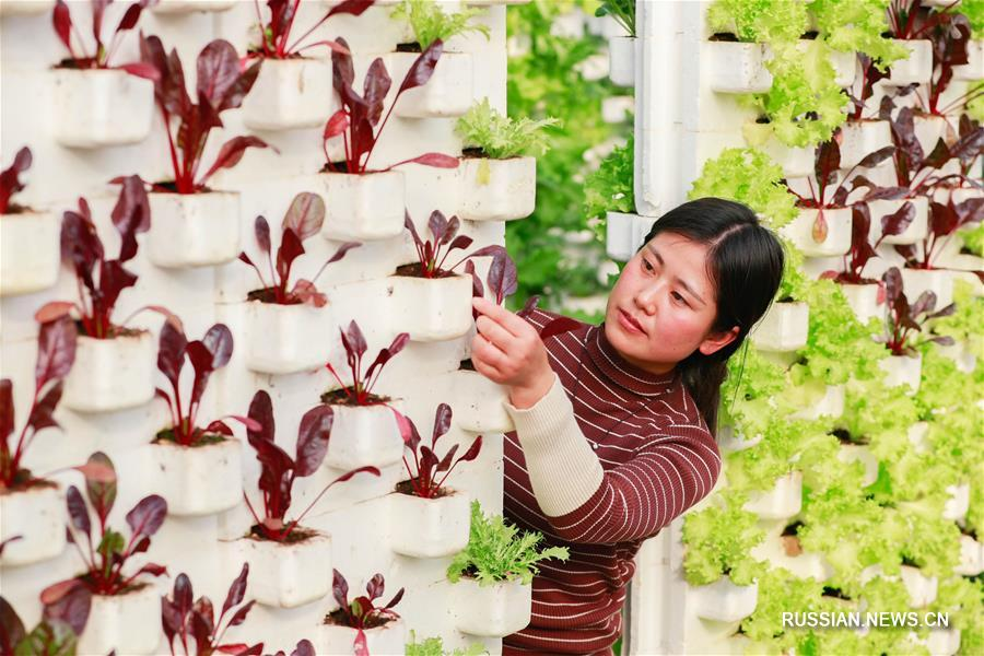 Парки креативного сельского хозяйства в уезде Сюйи