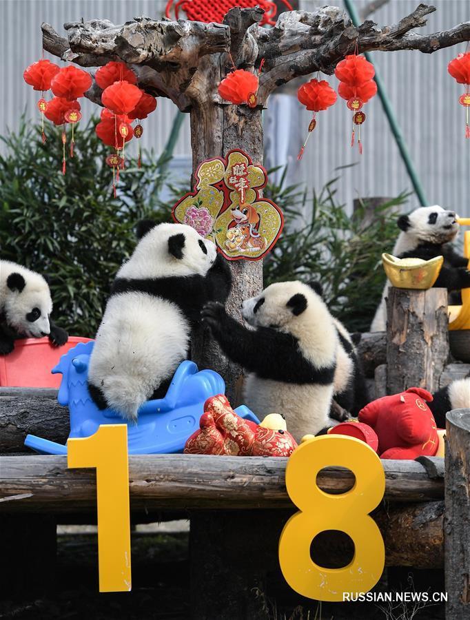 Новогоднее поздравление от бамбуковых медвежат