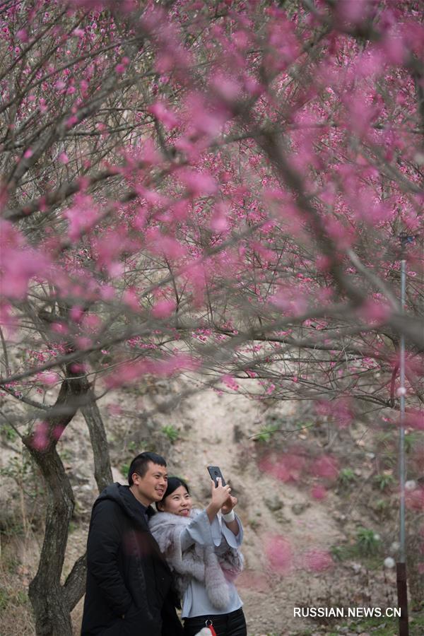 В ландшафтном парке Цзюхукэн провинции Чжэцзян цветут сливовые деревья