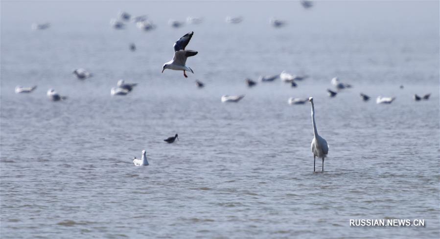 Возращающиеся на север перелетные птицы собрались на озере Дунтинху