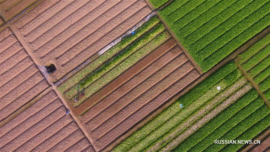 """Сельхозработы в первый день """"пробуждения насекомых"""""""