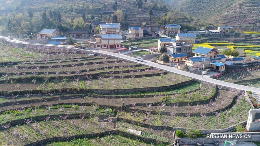 """""""Зеленый коридор"""" персиковых и сливовых деревьев в провинции Гуйчжоу"""