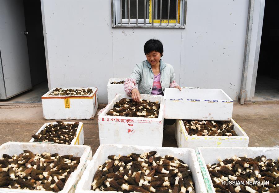 """Стратегия """"трех превращений"""" способствует развитию сельской местности в Чунцине"""