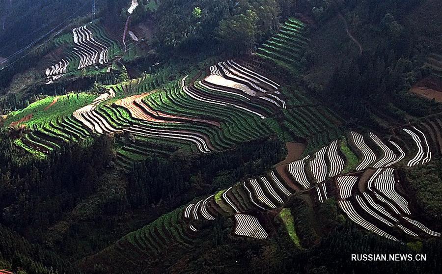 Весенние поля в Гуанси-Чжуанском АР