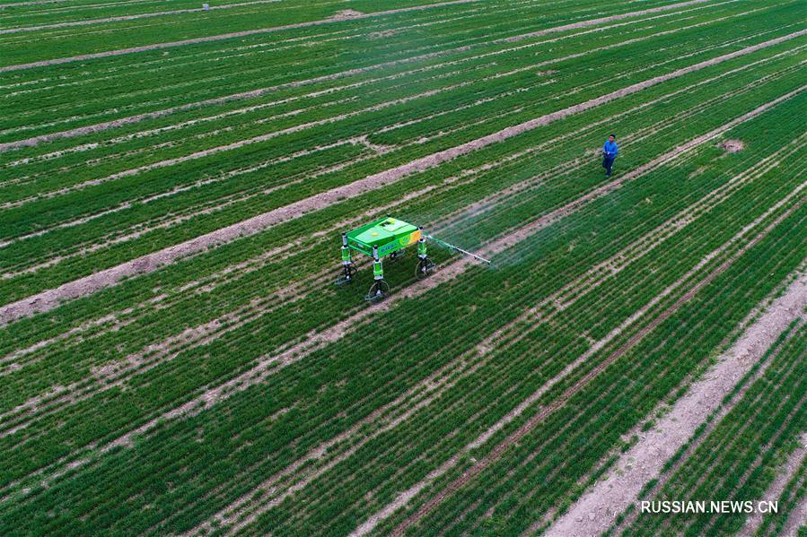 Техника будущего помогает фермерам в провинции Шаньдун