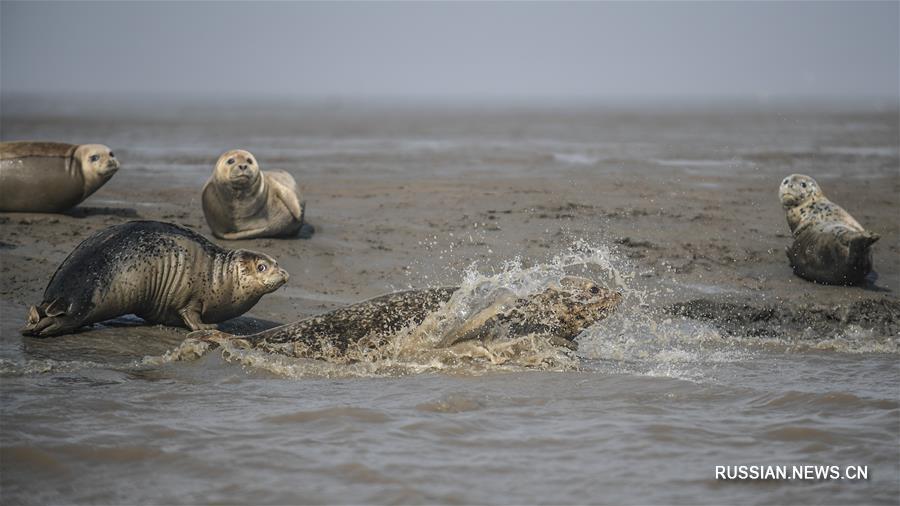 Ларги у морского побережья в Паньцзине