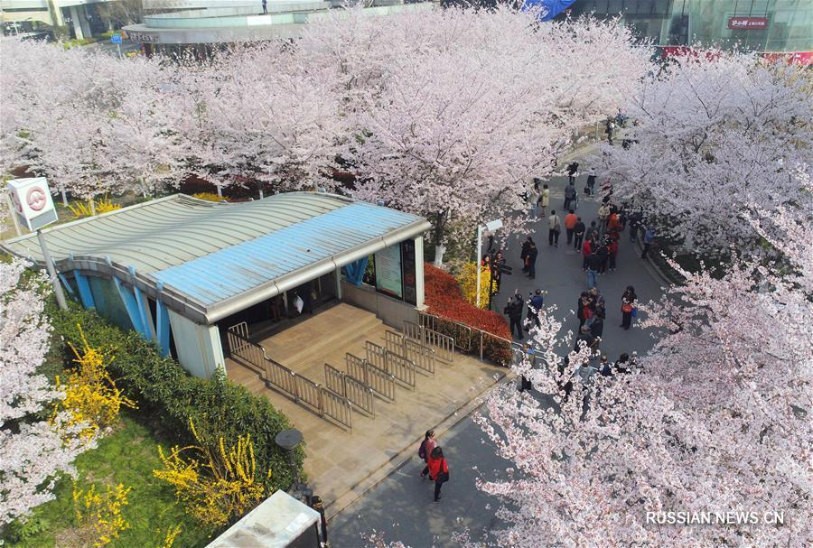 В Китае наступила пора массового весеннего цветения