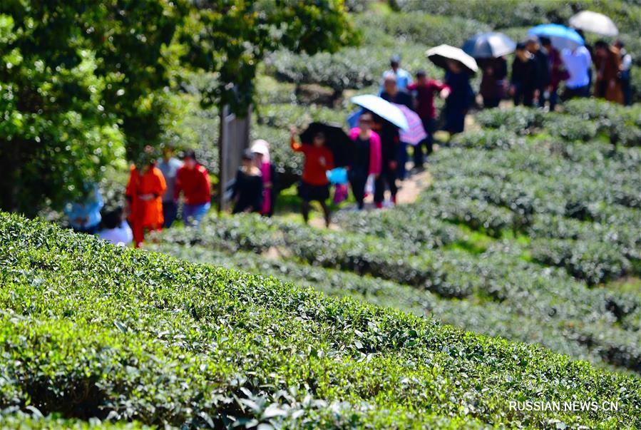 Прекрасные чайные плантации в провинции Фуцзянь